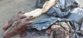 عاملان ذبح و توزیع گوشت الاغ واسب در یکی از دامداریهای جنوب تهران